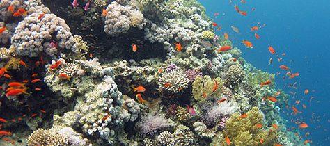 Sól Red Sea – Połączenie nauki z naturą